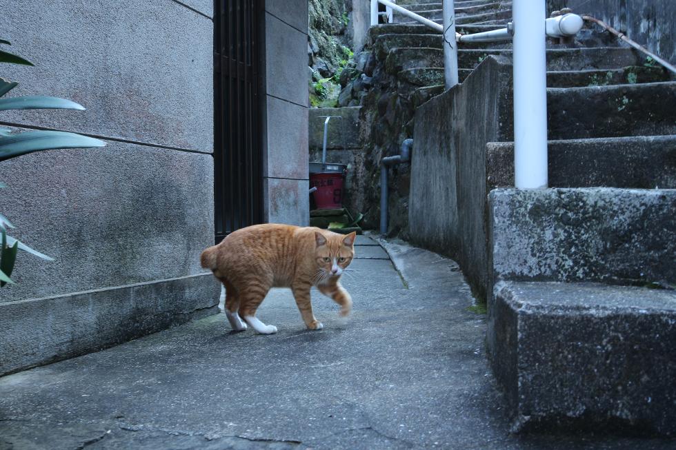 階段の脇で遊んでいる茶トラさん