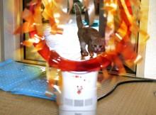 ダイソン扇風機、猫火の輪くぐり!的なもの
