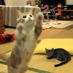 菊さんジャンプ…菊之助と力丸のジャンプ比較