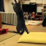 リッキージャンプ、菊之助と力丸のジャンプ比較