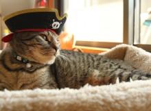 軽くポーズを決める猫