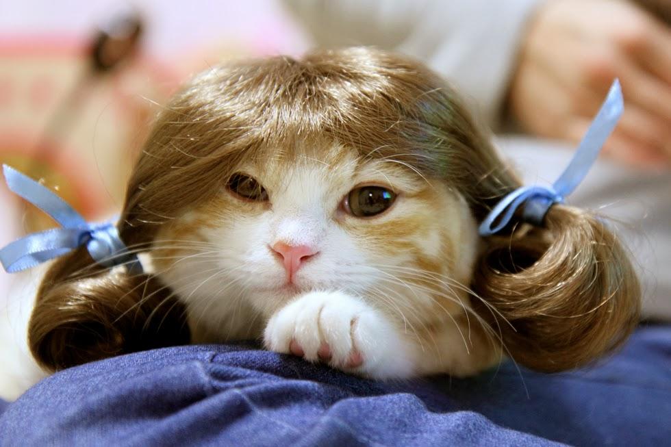 なかなか可愛く取れましたネコのペットカツラ