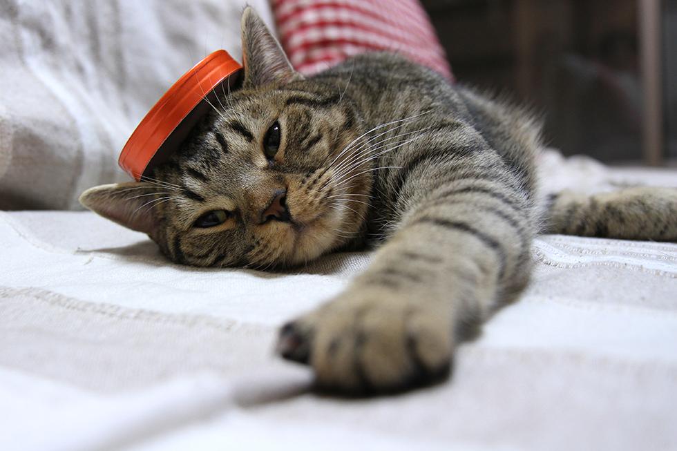 カンカン帽風のものをかぶる猫