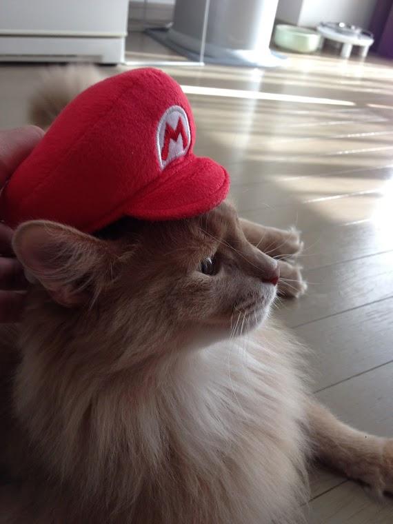 ソマリのマックス君、マリオ帽子をかぶる