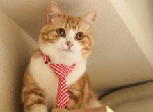 お洒落なネクタイ猫菊之助