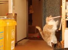 吹き戻し(ぴろぴろ笛)で猫をビックリさせてみた