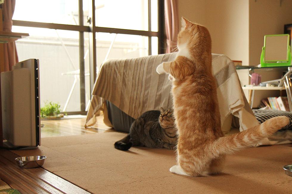 お尻も一緒について、更に安定感のある2足立ち姿。