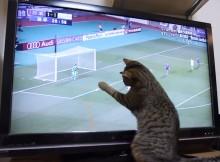 なでしこをサポート!テレビのサッカーボールにじゃれるネコ
