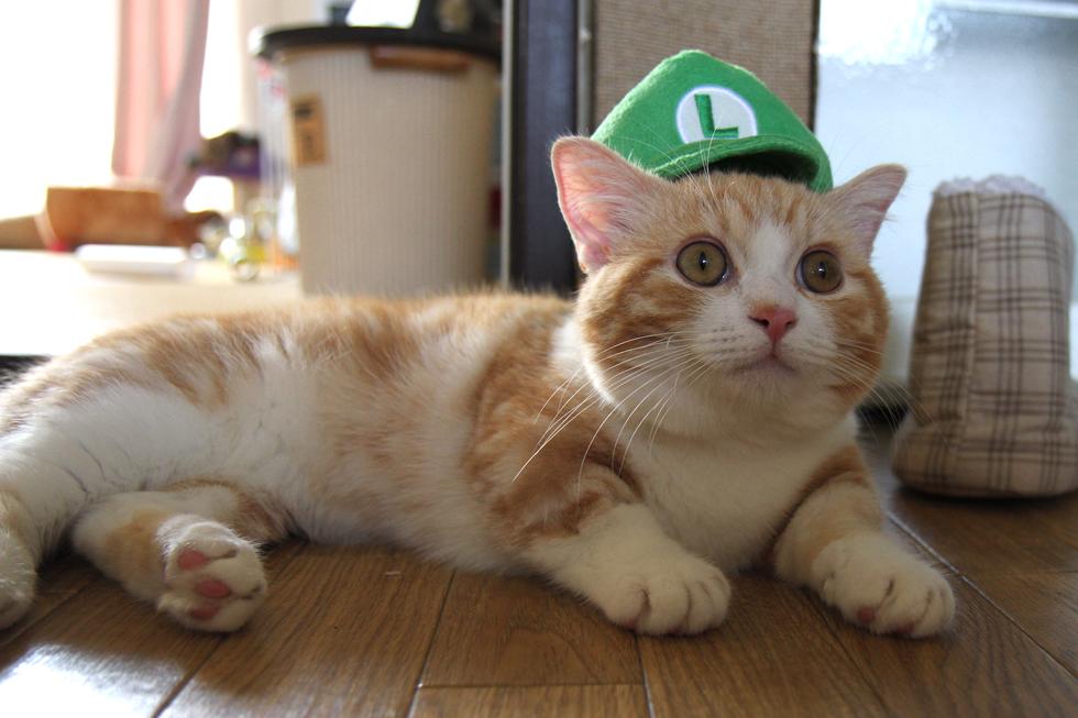 ルイージ帽子のネコ、緑弟もかわいいです
