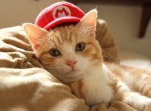 マンマ ミーヤ マリオ帽子猫のマンチカン菊之助