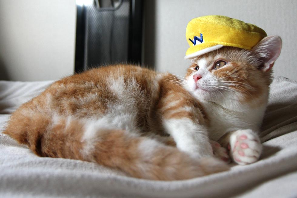 黄色の「俺様」ワリオ帽子 ケツアゴはマンチカンにはできません