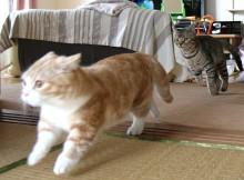 菊之助、力丸地震に飛び起きて逃げるイメージ