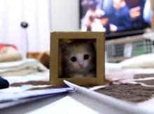 猫版ワニワニパニックくるくる回るマンチカン菊之助