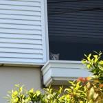下僕の帰宅を監視中