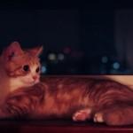 夜景をバックにくつろぐ猫