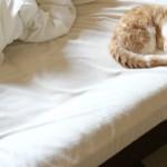 ベッドすみっこでお昼寝