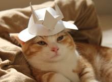 シャアのヘルメット帽子をかぶるネコ