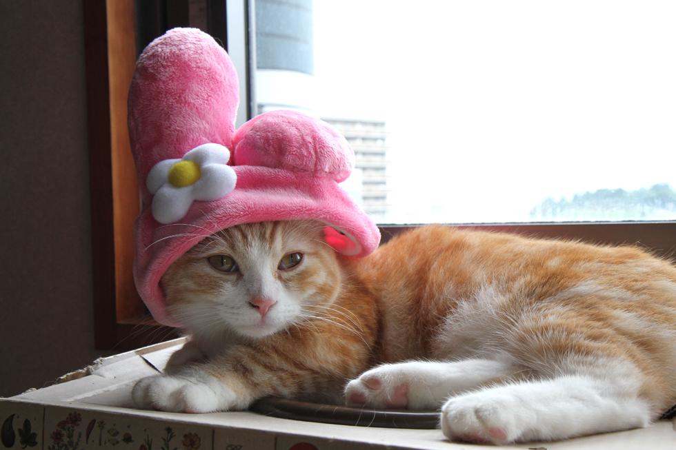 猫折れ マンチカン菊之助 マイメロコスプレ・かぶりもの