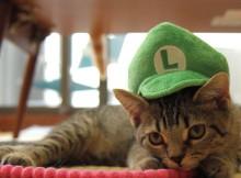 猫折れ マンチカン/Munchkin (cat)リッキー(力丸)ルイージ帽子コスプレかぶりもの