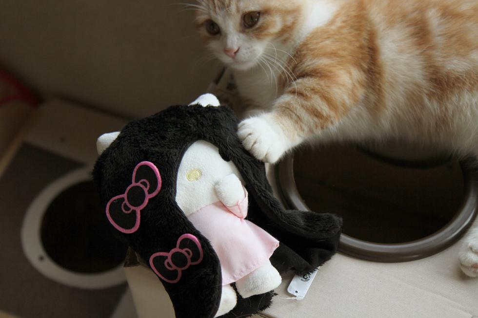菊さん 貞子3D 2 猫帽子コスプレ前