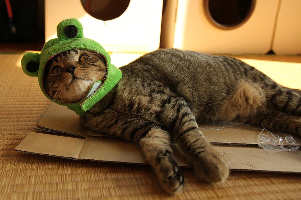 リッキー蛙 カエルかぶりもの