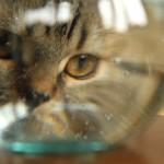 金魚鉢リッキーも覗き込む