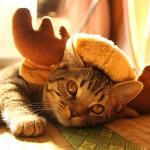 トナカイがやってまいりました(笑)トナカイ猫帽子