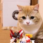 クリスマスは菊之助の誕生日!無事に1歳になりました。