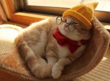 白雪姫7人の小人コスプレの猫