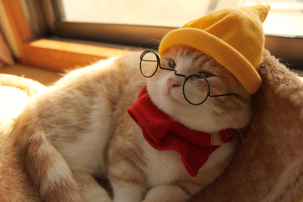 ディズニー白雪姫メガネをかけたのドワーフ