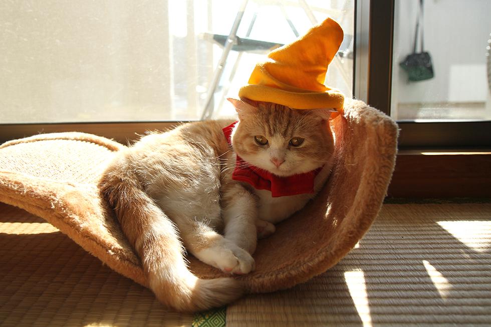 ドワーフ帽子をかぶってチューンとする菊之助
