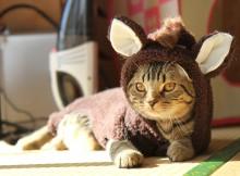マンチカン猫 力丸 馬コスプレ かぶりもの 帽子