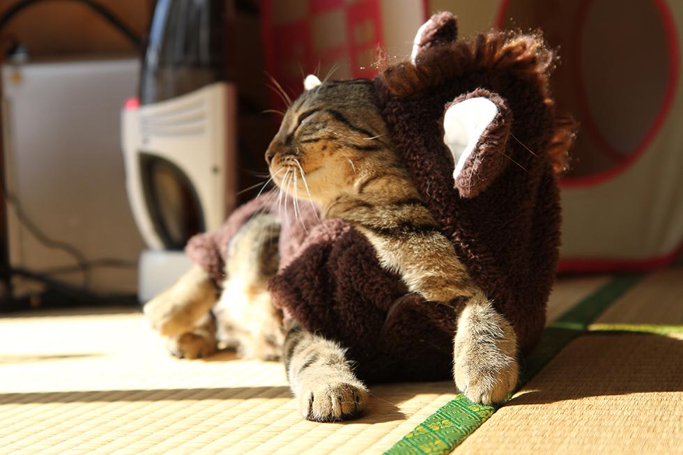 猫 リッキー 馬コスプレ かぶりもの 脱出