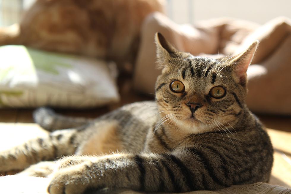 猫のリッキー 眠たい週末