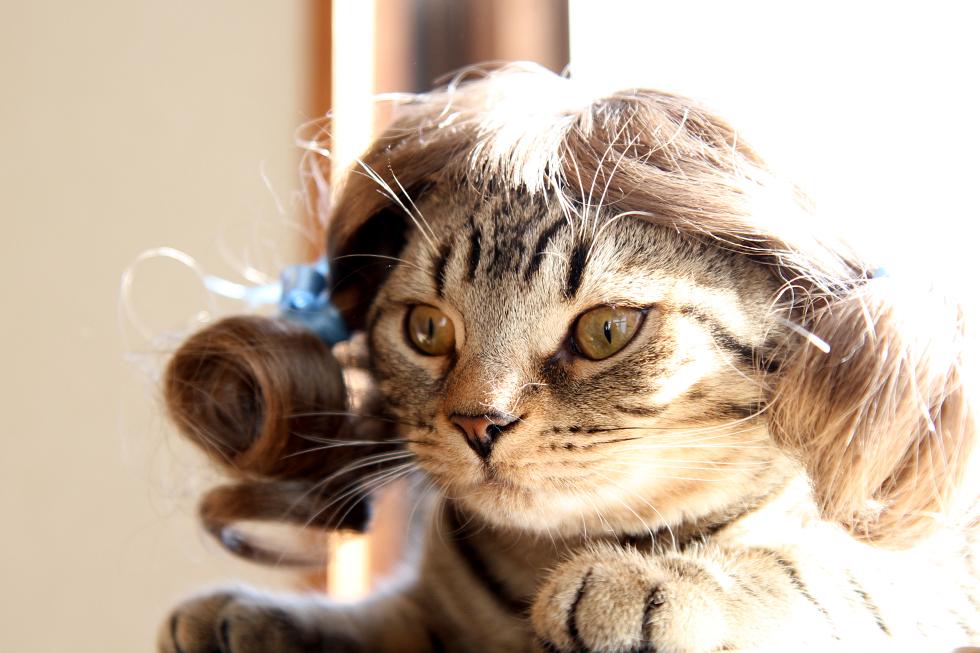 リッキー 寛いで猫カツラ・コスプレ・被り物