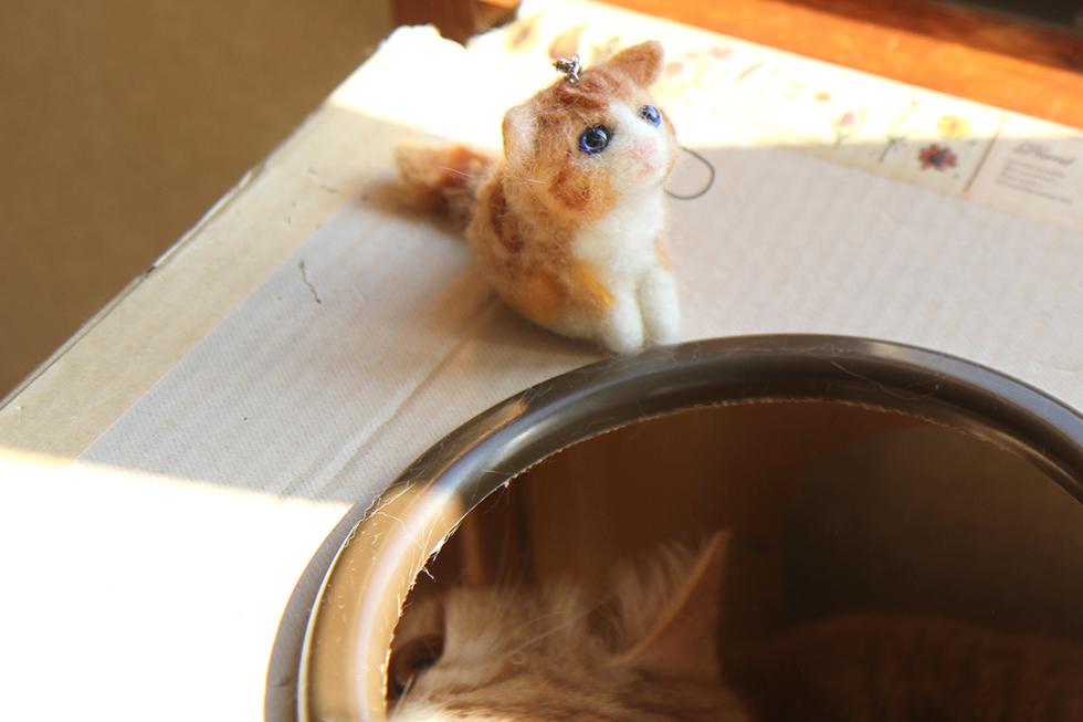 菊之助羊毛フェルト人形を窺うマンチカンさん