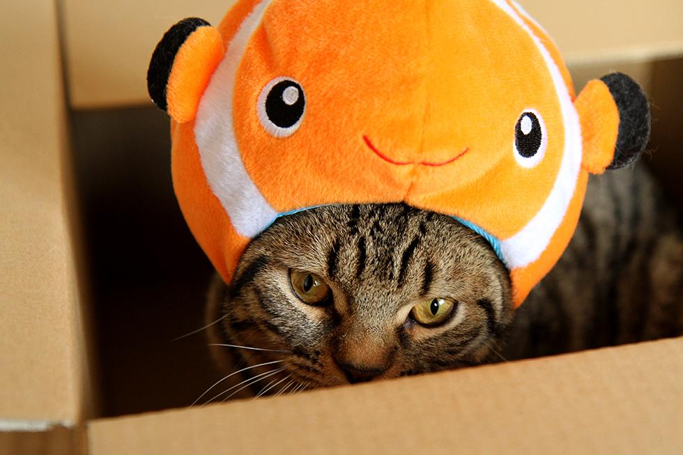 猫ねこリッキー カクレクマノミコスプレ帽子