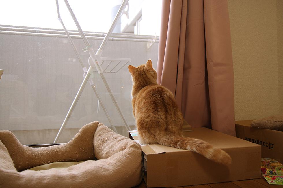 我が家の鳩害は俺が喰いとめてみせる!猫の菊さん