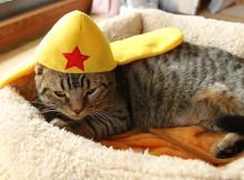 マンチカン力丸 ケロロ軍曹さんの帽子をかぶってみました