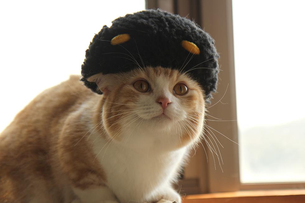 上記著名人の共通項のズラアフロ猫、マンチカン菊之助