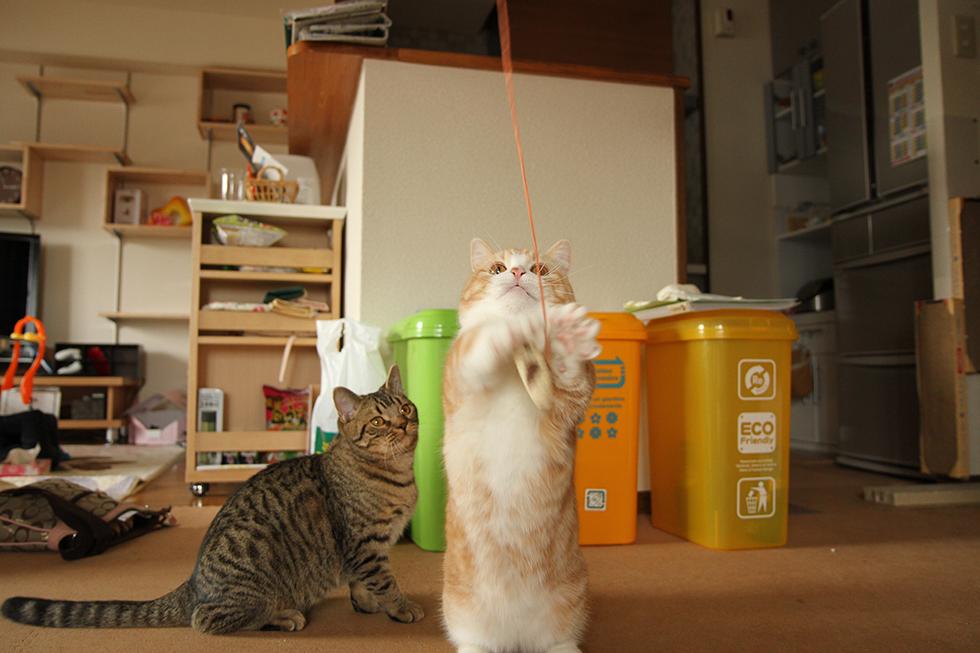 猫じゃらしの鼠さんに勢いよくキャッチ!