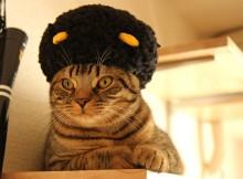 マンチカン力丸アフロヘアーかつら帽子かぶりもの