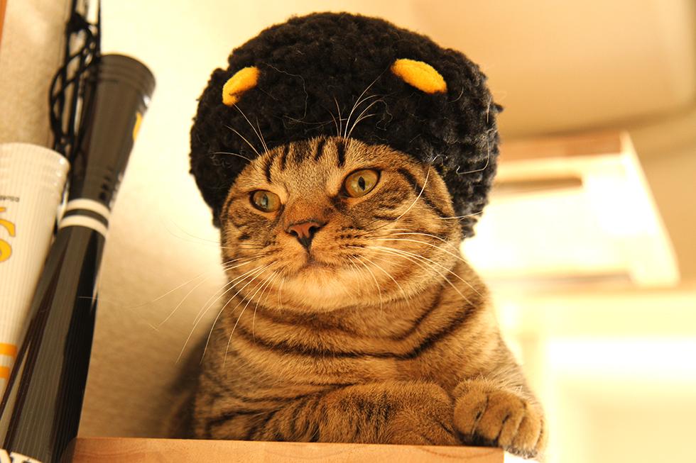 エマニエル坊やコスプレ猫のリッキー