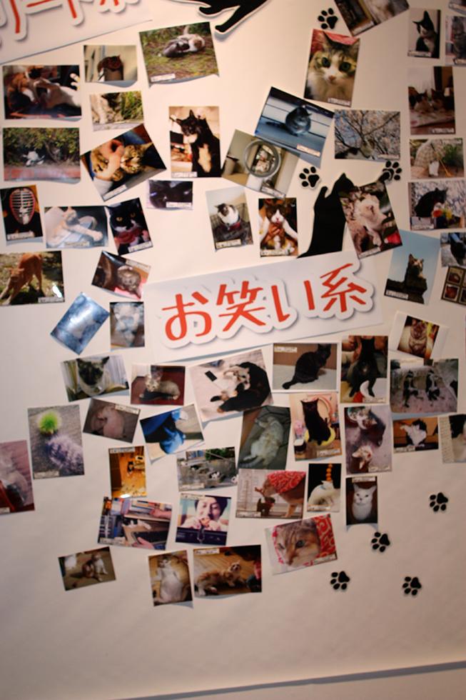 北九州市立いのちのたび博物館「まるごと猫展」