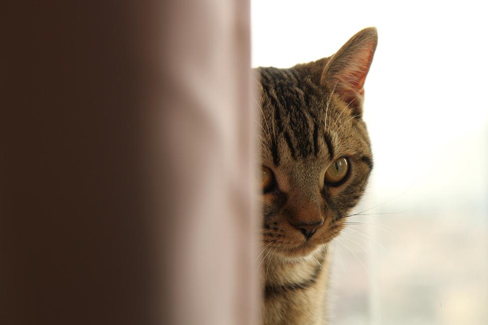 猫の場合はポートニャートって言うんですかね