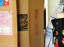 はこの中からこんにちは!同居人か菊さんを狙っております。
