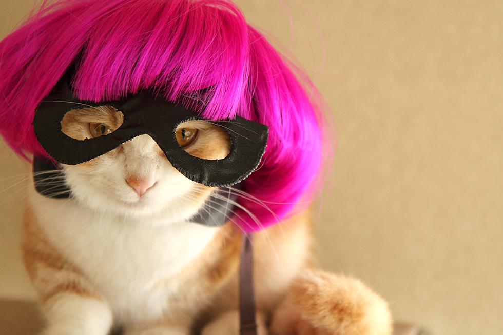 キック・アスのヒットガールの猫コスプレ・かぶりものかなりの自信作です