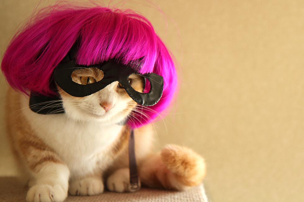 kick-ass hit girl Cosplay 猫帽子・ズラの菊さん