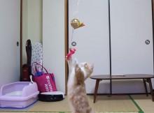 猫にくす玉-おめでとうございます!-2014