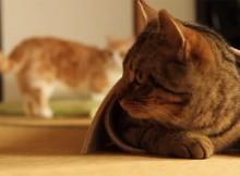 カーペット遊びから一転強襲!ネコとばっちり